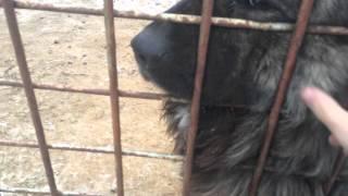 собака барабака сторож))