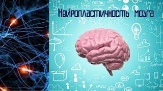 Нейропластичность, или Наш мозг любит учиться