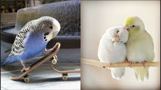 cute parrots doing funny stuff