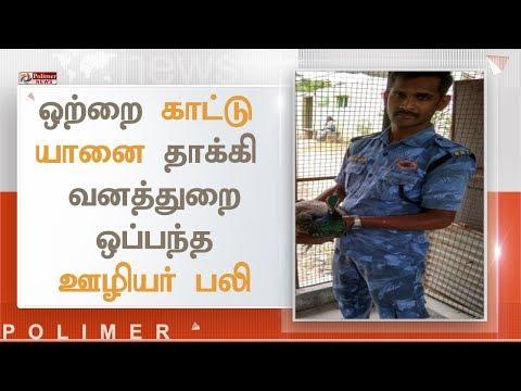 ஒற்றை காட்டு யானை தாக்கி வனத்துறை ஒப்பந்த ஊழியர் பலி | #ElephantAttack #Coimbatore
