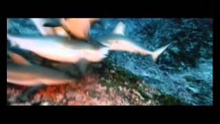 Большое путешествие в глубь океанов -  Трейлер