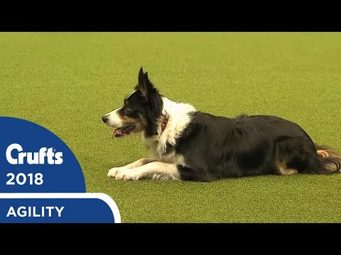 Agility - Crufts Team - Large Final Part 2 | Crufts 2018