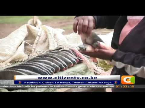 Dwindling fish market in Lake Naivasha