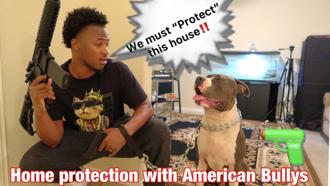How to Protect your home with American Bullys
