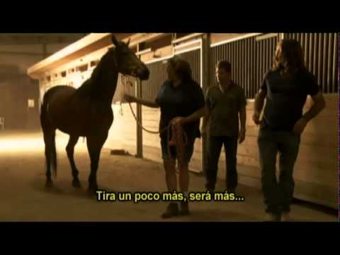 The horse tamer - Enigma from YouTube · Duration:  44 minutes 39 seconds