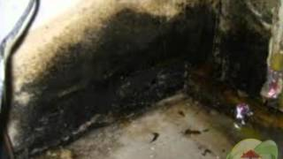 How to Kill Mold? Black Mold Abatement - Fresno CA