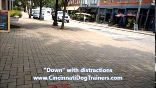 5lb Yorkie Pekingese Amazing Training Video At Cincinnati Dog Trainers Off Leash K9