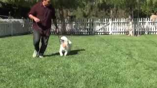 Golden Meadows Kennel | Lucy