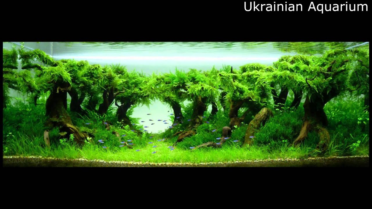 ... Aquascape - Underwater Landscapes - Aquascaping #5 NEW - YouTube