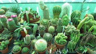 Top 5 Cactus Plants to Grow for Beginners YouTube Videos