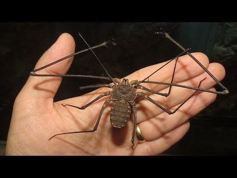 11 Frightening Animals that are SHOCKINGLY Harmless!