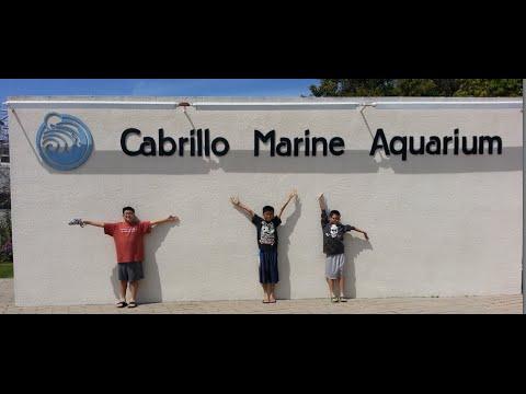 Cabrillo Marine Aquarium San Pedro