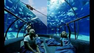 Visit Ocean Park China Hong Kong - Visit China Travel Tour Guide