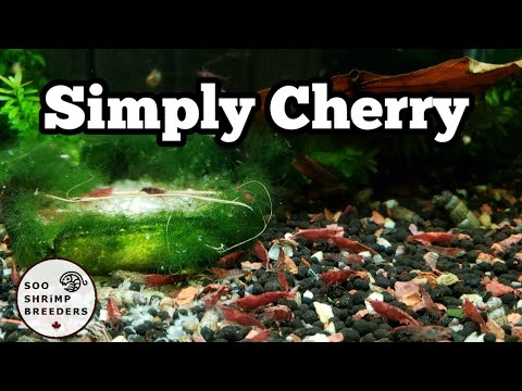 Shrimp Tank Maintenance (Full Cleaning)