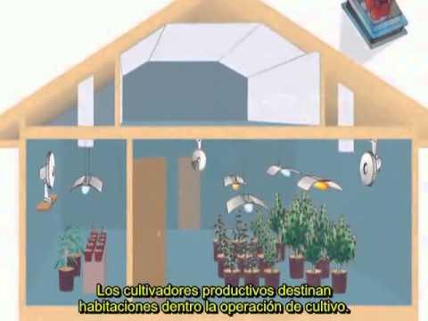 2 jc ug1 construcci n del cuarto de cultivo youtube