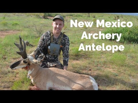 New Mexico Public Land Antelope