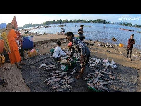 เลาะเที่ยวลาวใต้ EP6.ตลาดซื้อขายปลาน้ำโขงบ้านนากะสัง แขวงจำปาสัก