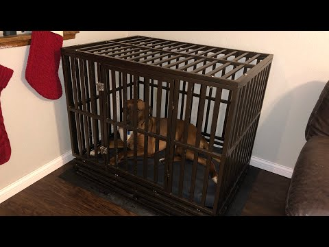 The BEST Dog Cage! Amazon HAIGE Pet Nanny Dog Crate Review