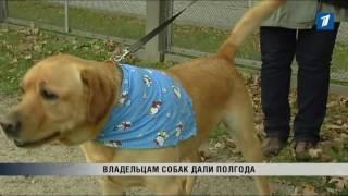 ПБК: Чипирование домашних животных