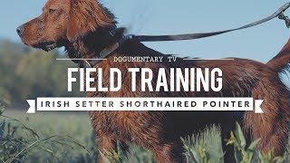 FIELD TRAINING: GERMAN SHORTHAIRED POINTER AND IRISH SETTER