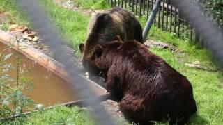 Фарфоровая свадьба медведей