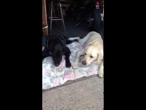 🦴my-dogs-enjoying-their-nightly-treat🦴