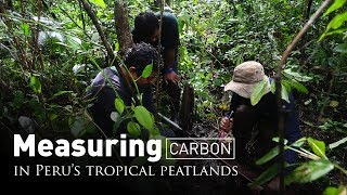 Measuring carbon in Peru's tropical peatlands