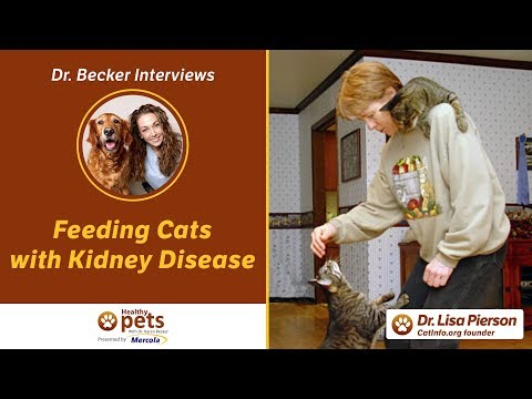 Dr  Becker Interviews Dr. Pierson About Feeding Cats With Kidney Disease