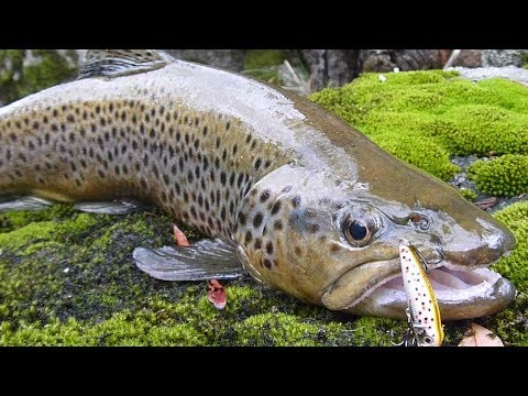 Australian Trout Rivers  Part 2 - Upper Murray River
