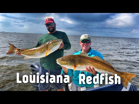 Amazing Day Fishing For Redfish In Venice Louisiana