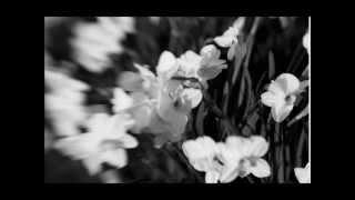 Silent Strike- Flowers