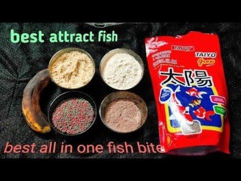 Rohu Fish Bite | Taiyo Fish Bite | Best Fish Hunting Bite