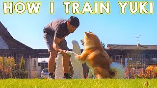 Akita Dog - This is how I train Yuki, my Japanese Akita. I taught h...