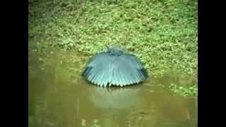 cc loi chim c cch săn mồi kỳ lạ loai chim san moi