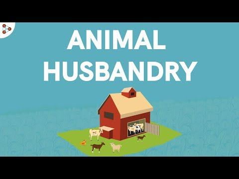 Animal Husbandry and Cattle Farming - CBSE Class 9