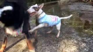犬しか友達がいない http://chikuwarintiffany.blog.jp.