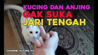 Download Video Kucing dan Anjing Gak suka Jari Tengah  || Jangan coba coba ya heheh... MP3 3GP MP4