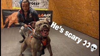 THE HULK LIFE: One of the SCARIEST GUARD DOGS i have ever seen! PUPPIES FATHERHOOD!