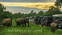 Safari im Udawalawe Nationalpark – Elefanten hautnah erleben • Sri Lanka • Weltreise | Vlog #021