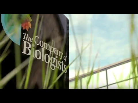 The Company of Biologists: who we are and what we do