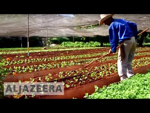 Cuba's organic farms could be the future of agriculture