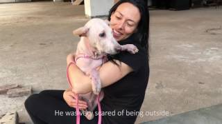 This woman rescued Pao from a dog meat farm. Their story will melt your heart.
