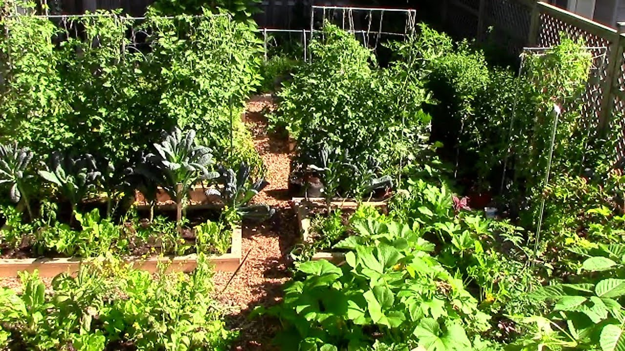 How to Grow a lot of Food in a Small Garden 9 EZ tips YouTube