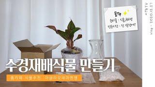 홈카페 꾸미기 수경재배식물 만들기,키우기,추천