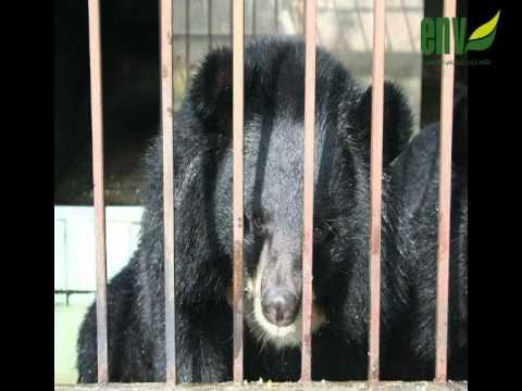 Thông điệp truyền thông bảo vệ Gấu (Hoạt cảnh)