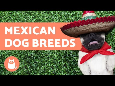 Mexican Dog Breeds - Existing and Extinct