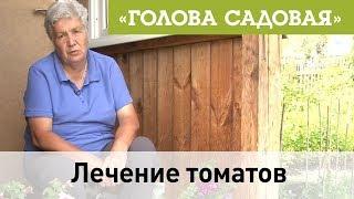 Голова садовая - Лечение томатов