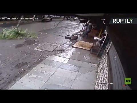 لحظة سقوط شجرة جوز الهند على امرأة في ضواحي مومباي  - 15:21-2017 / 7 / 22