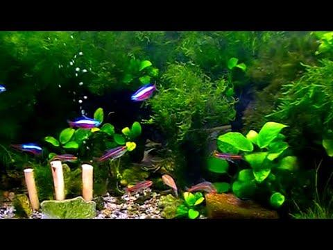 Аквариум и его обитатели - тропические рыбы.