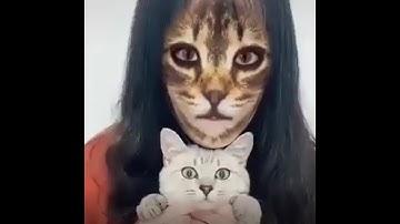 La réaction des chats face à ce filtre Instagram va te surprendre !